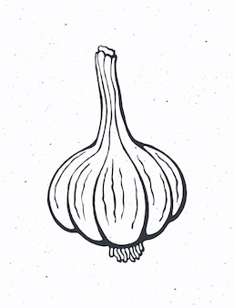 Testa d'aglio intera cibo vegetariano sano condimento per insalata di verdure illustrazione vettoriale