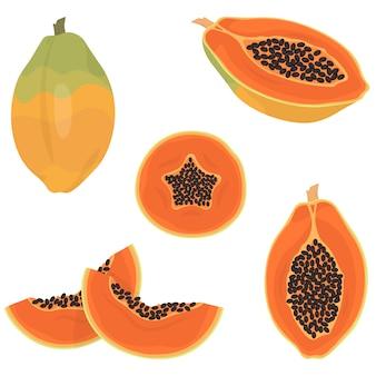 Papaia intera ed affettata. frutta tropicale in stile cartone animato.