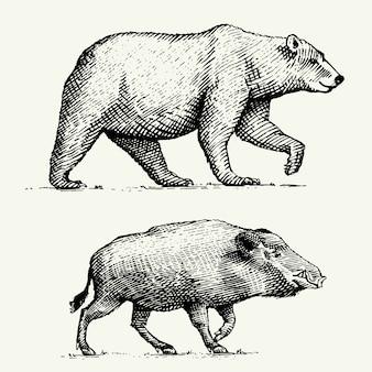 Orso selvatico grizzly e cinghiale o maiale incisi disegnati a mano nel vecchio stile di schizzo, animali vintage