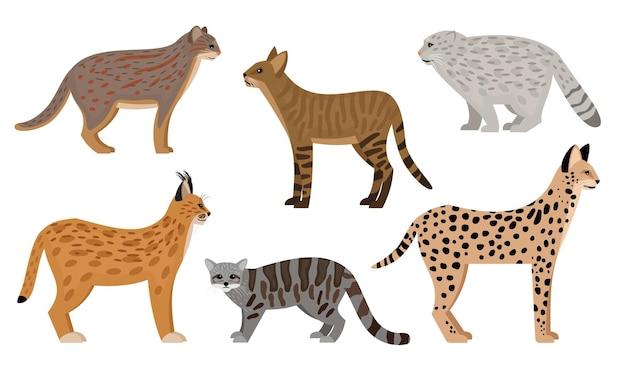 Set di gatti selvatici. grandi mammiferi aggressivi del fumetto, personaggi dello zoo lanuginoso, serval giungla gatto pallas gatto arrugginito gatto maculato caracal illustrazione vettoriale, simpatici predatori fauna selvatica isolata su priorità bassa bianca