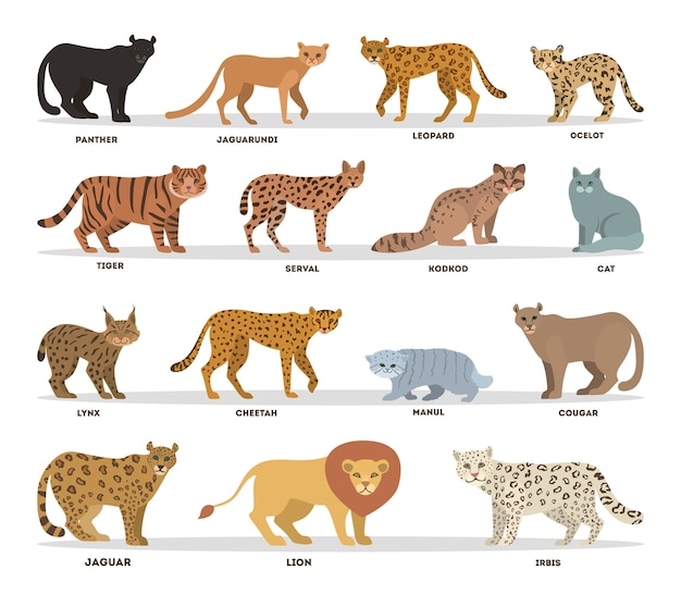 Set di gatti selvaggi e dometici. collezione di famiglia di gatti con tigre, leopardo, pantera e leone. illustrazione vettoriale piatto isolato