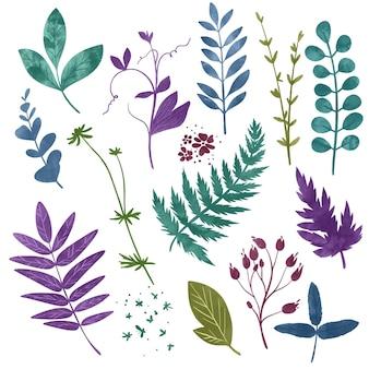 Elementi floreali selvatici erbe fiori e foglie