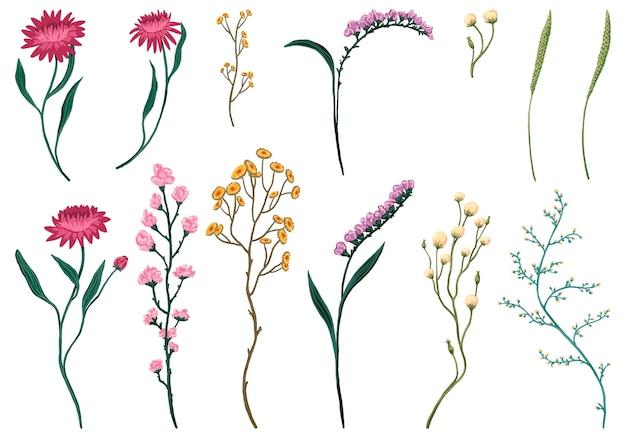 Insieme dell'illustrazione di vettore disegnato a mano dei fiori selvaggi. collezione di schizzi botanici astratti. disegno floreale vintage colorato isolato su bianco. elementi delicati per il design