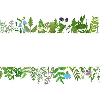 Banner di erbe selvatiche. foglie di cartone animato, brunch, fiori, ramoscello isolato. illustrazione disegnata a mano.