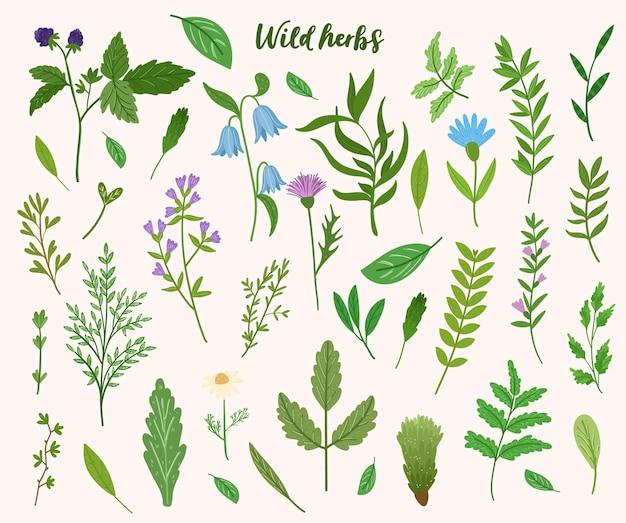 Raccolta di erbe selvatiche. foglie di cartone animato, brunch, fiori, ramoscello. illustrazione disegnata a mano. Vettore Premium