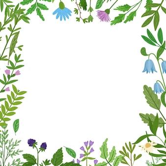Cornice di erbe selvatiche. foglie di cartone animato, brunch, fiori, ramoscello isolato. illustrazione disegnata a mano.