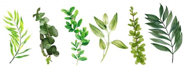Foglie selvatiche e convolvolo, collezione verde brillante dell'acquerello