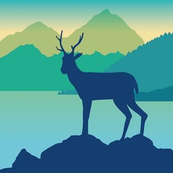Animale selvatico della renna nella scena del campo