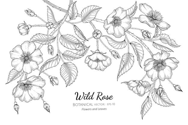 Illustrazione disegnata a mano botanica del fiore e della foglia della rosa selvatica.