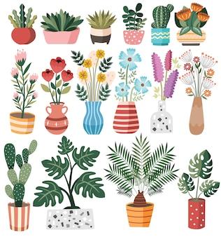 Collezione wild succulent