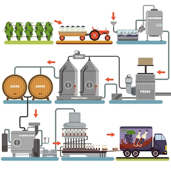 Processo di produzione del vino, bevanda di produzione da uva illustrazioni su uno sfondo bianco