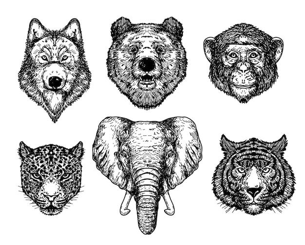 Lupo orso scimmia tigre ed elefante disegno a mano e schizzo in bianco e nero