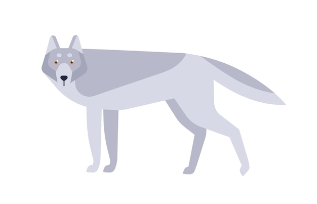 Lupo piatto illustrazione vettoriale. animale selvatico in stile scandinavo isolato su priorità bassa bianca. mammifero canino grigio, disegno minimalista predatore della fauna selvatica. carnivoro pericoloso che abita nelle foreste.