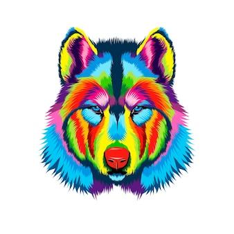 Ritratto di testa di lupo da vernici multicolori spruzzata di disegno colorato ad acquerello realistico