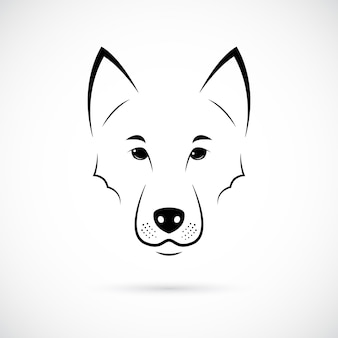 Muso di lupo su sfondo bianco
