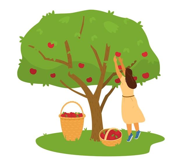 Coltivatore della donna che raccoglie il raccolto delle mele dall'albero di mele nell'illustrazione del canestro.