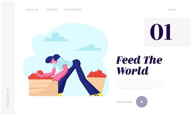 Coltivatore della donna raccoglie la raccolta delle mele nel cestino e nella scatola nel frutteto. carattere del giardiniere che raccoglie frutta in giardino, produzione agricola, pagina di destinazione del sito web, pagina web.
