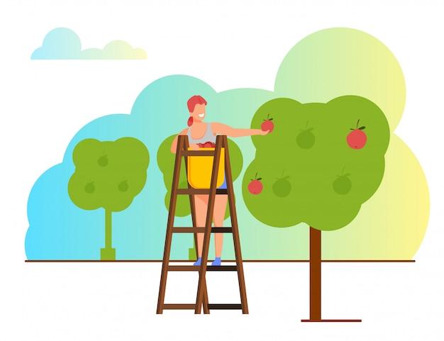 La donna seleziona la raccolta della mela al canestro in frutteto