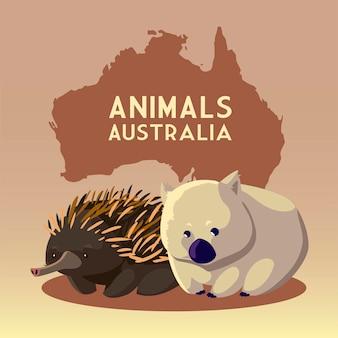 Wombat e riccio continente australiano mappa animale illustrazione della fauna selvatica