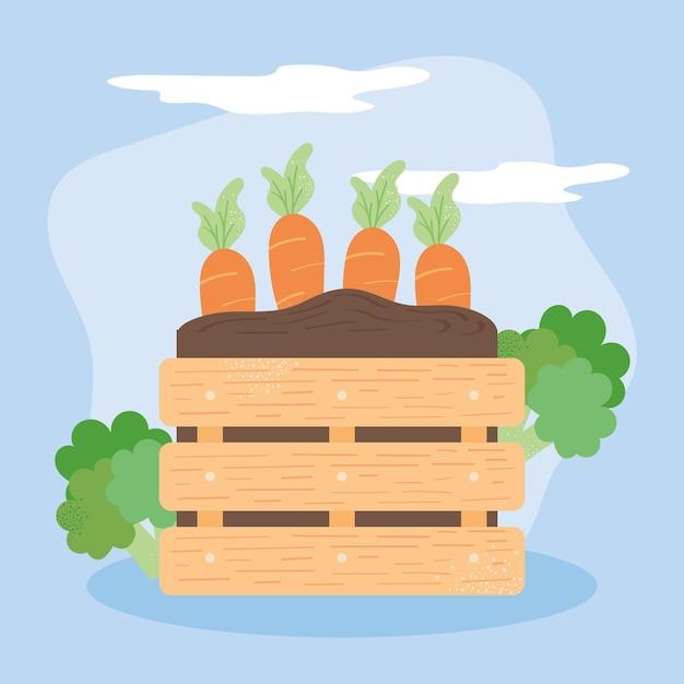 Cesto in legno e carote