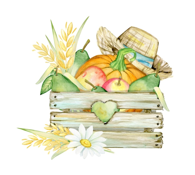 Scatola di legno, mele zucca, pere, camomilla, spighe di grano, cappello di paglia, erba. concetto di acquerello su uno sfondo isolato. Vettore Premium