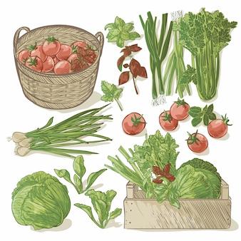 Cassa di legno piena di verdure fresche ed erbe aromatiche