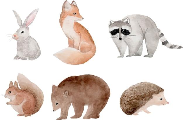 Clipart animali del bosco