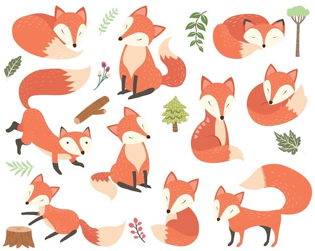 Elementi di volpe animale del bosco