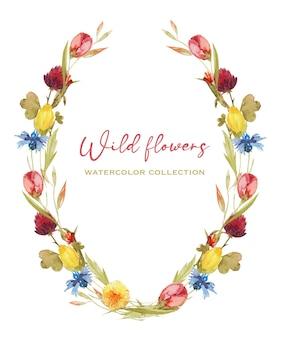 Corona ovale cornice di acquerello fiordalisi tarassaco trifoglio e altri fiori di campo illustrazione isolato