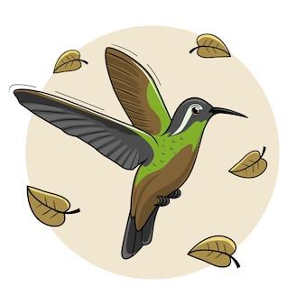 Xantus bird cartoon humming bird flying colibri