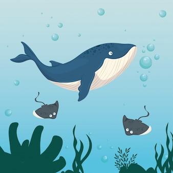 Xxx e animali marini selvaggi nell'oceano, abitanti del mondo marino, simpatiche creature sottomarine, fauna sottomarina del tropico