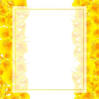 Bordo giallo della carta dell'insegna del giglio di canna