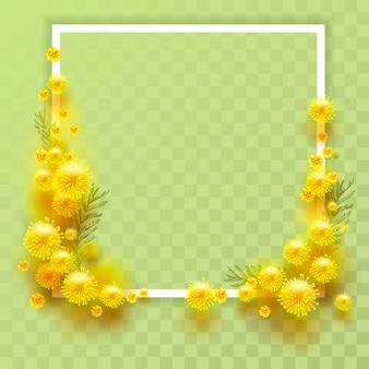 Mimosa gialla su sfondo trasparente. cornice modello per biglietto di auguri