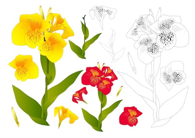Profilo del fiore di giglio di canna giallo e rosso