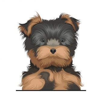 Illustrazione del cane dell'yorkshire terrier