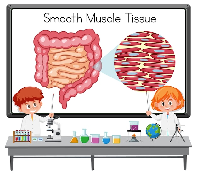 Giovane scienziato che spiega il tessuto muscolare liscio davanti a una tavola con elementi di laboratorio