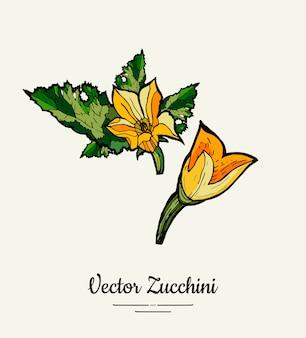 Zucchini disegnati a mano set di illustrazione.