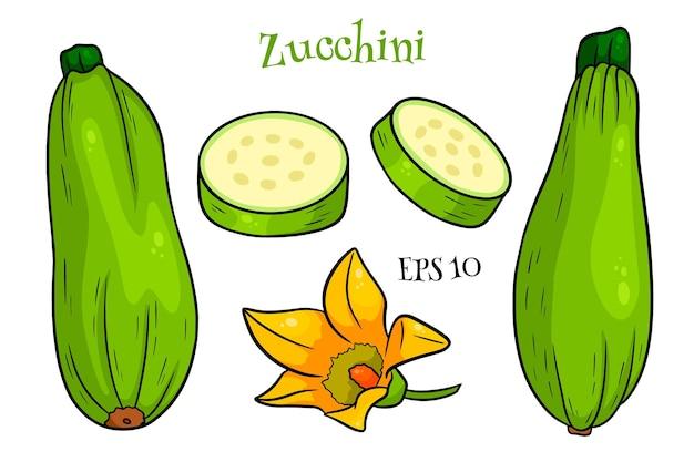 Zucchine insieme. zucchine e fiori affettati freschi. in stile cartone animato. illustrazione vettoriale per design e decorazione.