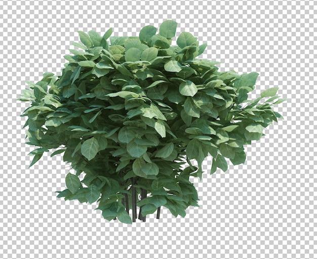 3d geef borstelboom terug die op wit wordt geïsoleerd