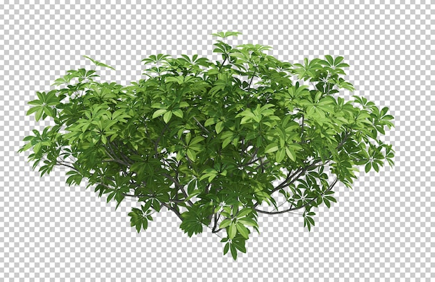 3d render brush tree aislado en blanco