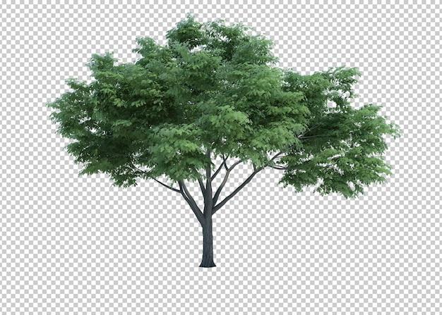 3d-rendering natuur object boom geïsoleerd