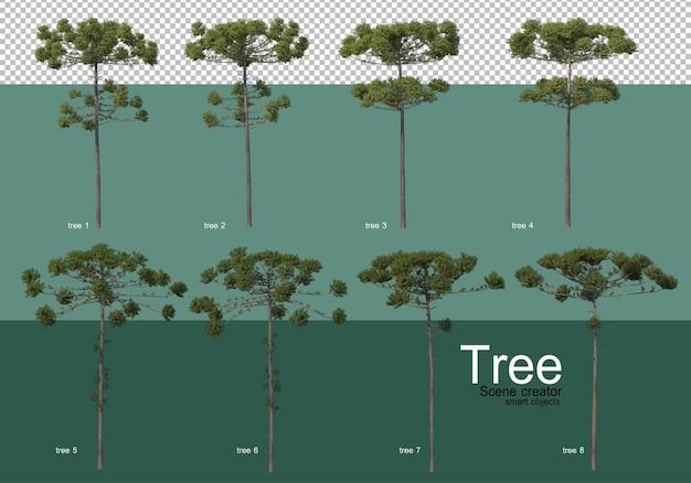 3d-rendering, verschillende soorten boomlay-outs