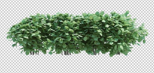 3d rendono l'albero della spazzola isolato su bianco