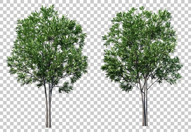3d-weergave van carrotwood bomen