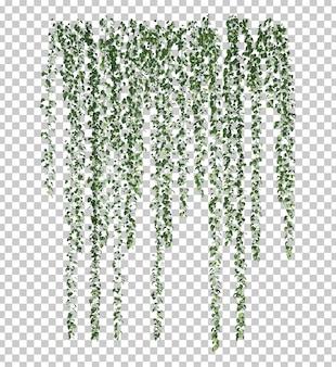 3d-weergave van epipremnum aureum