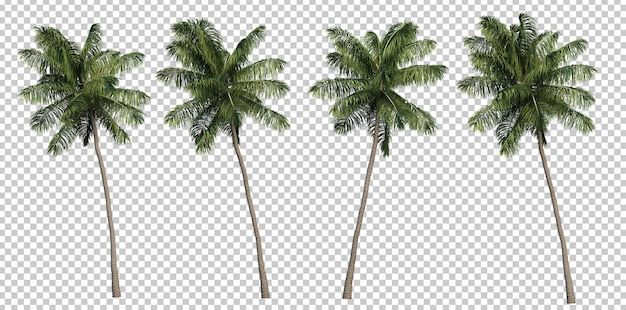 3d-weergave van kokospalmen