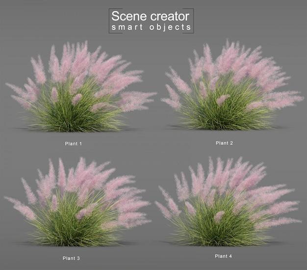 3d-weergave van pink flamingo muhly grass