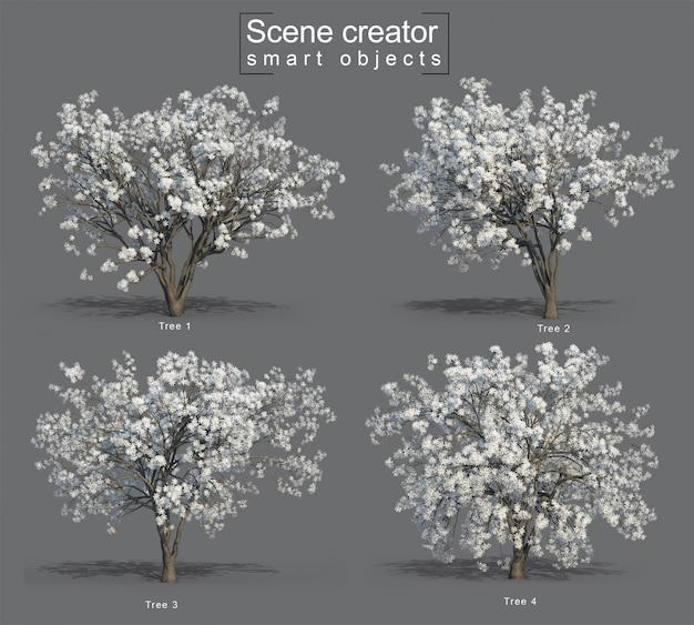 3d-weergave van star magnolia