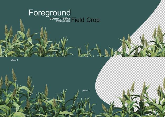 3d-weergave van verschillende soorten agronomie