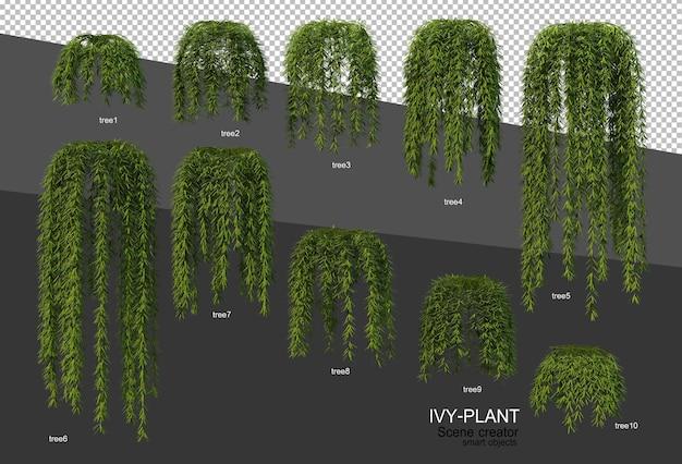 3d-weergave van verschillende soorten klimopontwerp